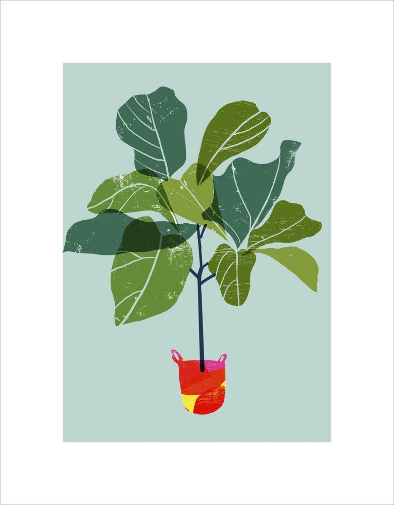 Fiddle Leaf Fig Tree by Ana Zaja Petrak